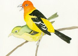 Western Tanagers card