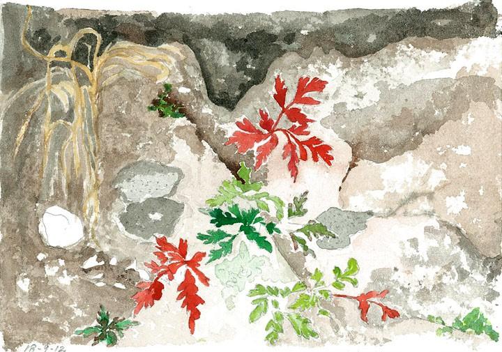 watercolor sketch red leaves